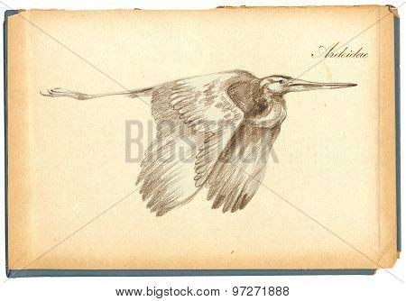 Pencil Drawing, Sketch - Bird, Heron
