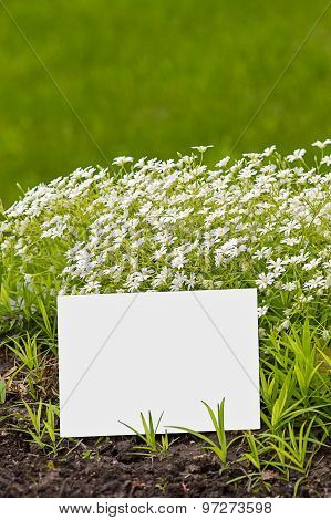Greeting Card In Greenery