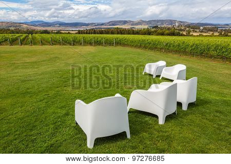 Chairs in vineyard