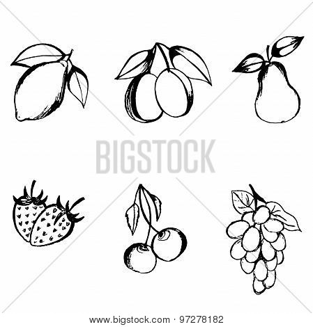 vector illustration fruits in sketch style isolated on white background