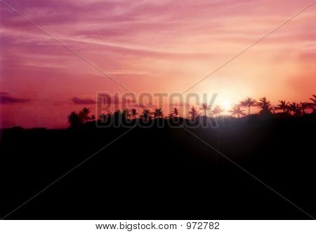 Sunset Behind Palmtrees