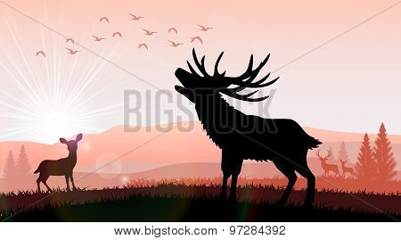 Silhouette a deer and kangaroo
