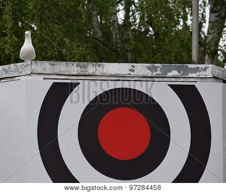Seagull On Target