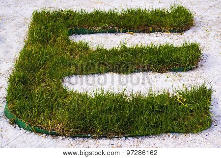 The Letter E With Herbs