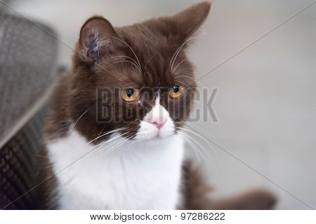 Cat with grumpy look