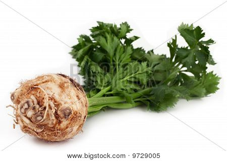Celery With Root