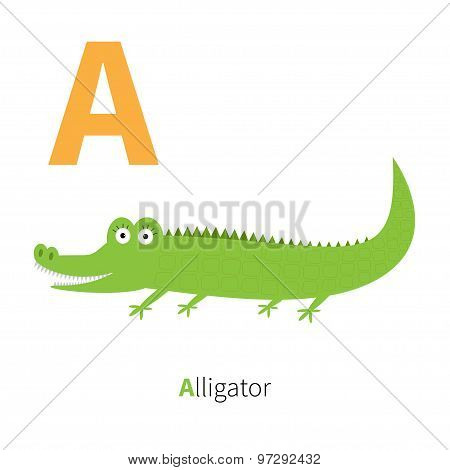 Letter A Alligator Zoo Alphabet. English Abc With Animals Education Cards For Kids Isolated White Ba