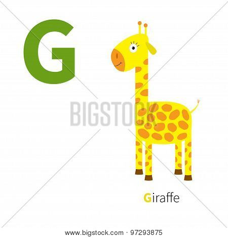 Letter G Giraffe Zoo Alphabet. English Abc With Animals Education Cards For Kids Isolated White Back