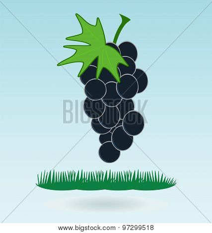 Bunch Of Grapes, Grass Concept, Grass Concept