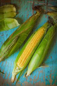 image of sweet-corn  - Freshly picked ear of maize sweet corn cob on rustic blue wood background  - JPG