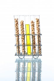 foto of modifier  - Soybean genetically modified Plant Cell laboratory - JPG