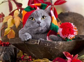 image of gnome  - cat in gnome hat - JPG