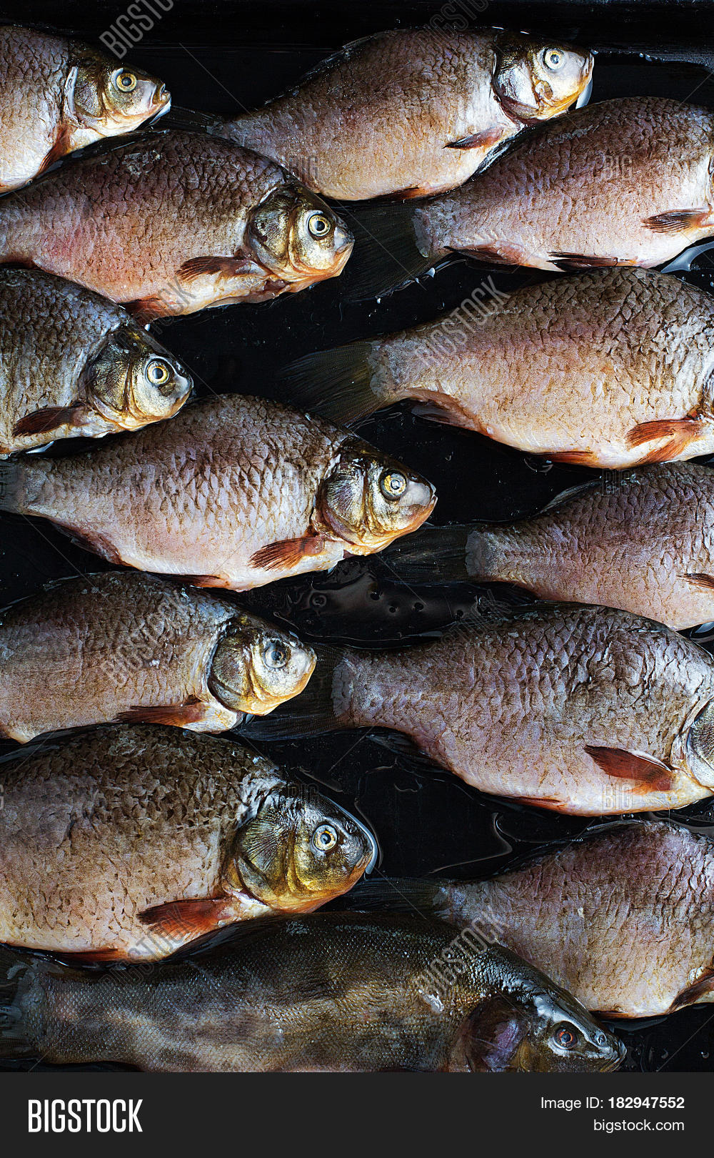 Lots of fresh river fish on a tray stock photo stock for Lots of fish