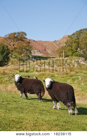 Hill Farming