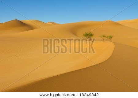 Beautiful Dune - Awbari Sand Sea, Sahara Desert, Libya
