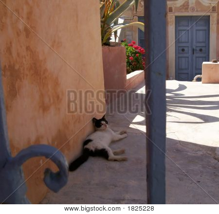 Stray Cat Relaxing In The Shade
