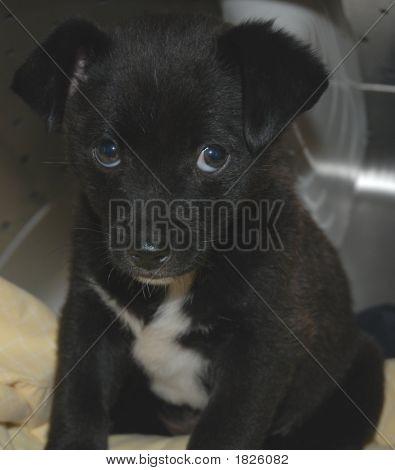 1  Puppy