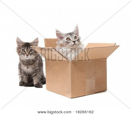 Two Small Kittens In A Cardboard Box