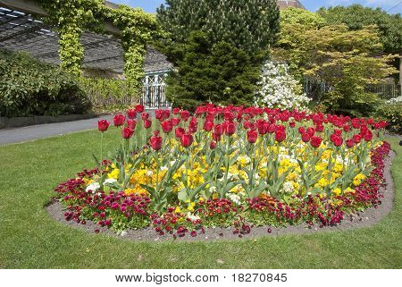 Tulips Bell Daisies And Wallflowers