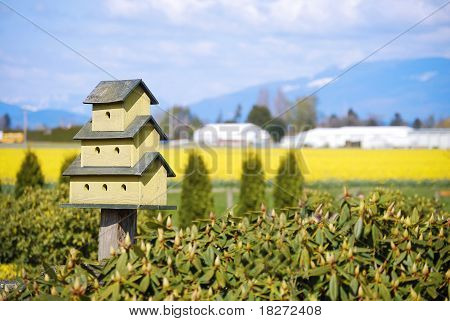 Little Green  Birdhouse