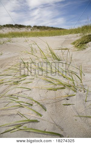 New Hampshire Beach Dunes