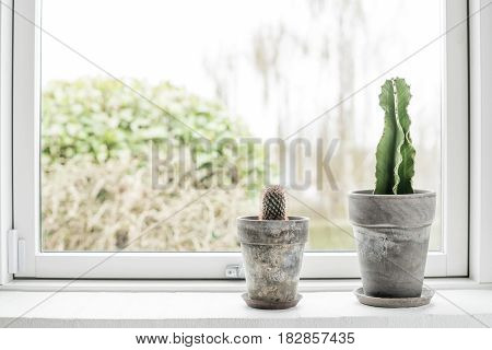 Cactus In Flower Pots In A Bright Window