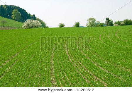 Hilly  Field
