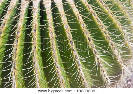 Close-up Of Barrel Cactus Spines
