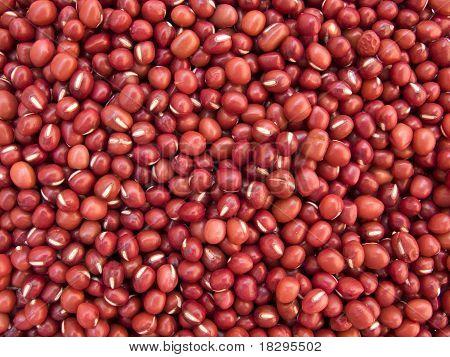 Red Bean Adzuki