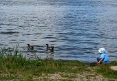 image of child feeding  - A small boy is feeding the ducks at the lake - JPG