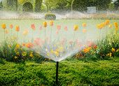 Irrigation System Water Sprinkler Working In Garden poster