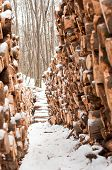 Wooden Loges Piled Up Covered By Snow