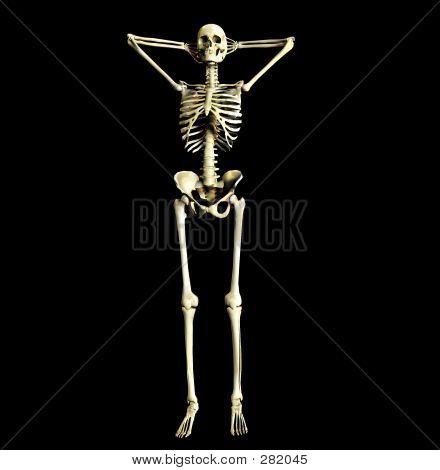 Bone 22
