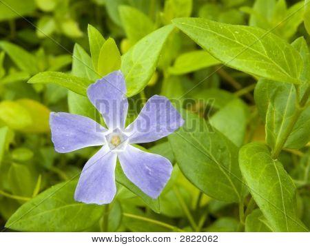 Purple Flower In Green