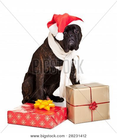 Christmas dog with presents