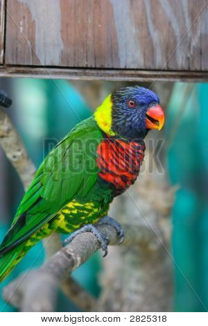 An Image Of A Colorful Parrot