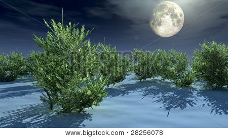 christmas trees under moonlight