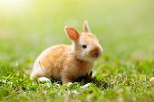 Baby Rabbit Outdoor. Easter Bunny. poster