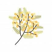 Branch Of Silver Wattle Or Mimosa With Gorgeous Blooming Yellow Flowers And Leaves. Spring Plant. Na poster