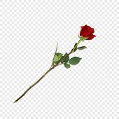 Vector Illustration Of Photo-realistic, Highly Detailed Flower Of Red Rose Isolated On Transparent B poster