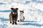 A Black Dog And A White Cat Are Sitting Together On A Snowy Street. The Concept Of Friendship, Love  poster