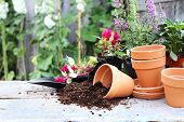 stock photo of hollyhock  - Rustic table with flower pots potting soil trowel and plants in front of an old weathered gardening shed - JPG