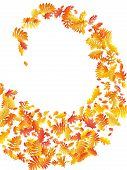 Oak, Maple, Wild Ash Rowan Leaves Vector, Autumn Foliage On White Background. Red Orange Yellow Ash  poster
