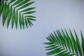 Creative Flat Lay Top View Of Green Tropical Palm Leaves On Blue Grey Paper Background With Copy Spa poster