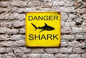 Danger Shark Yellow Warning Sign On An Old Brick Wall With A Picture Of A Shark And Text In A Close  poster