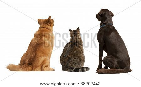 Cat And Dogs Looking Up