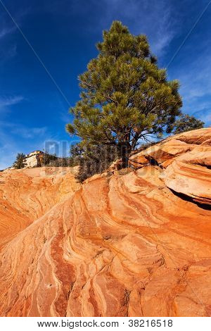Pine Tree On Red Rocks