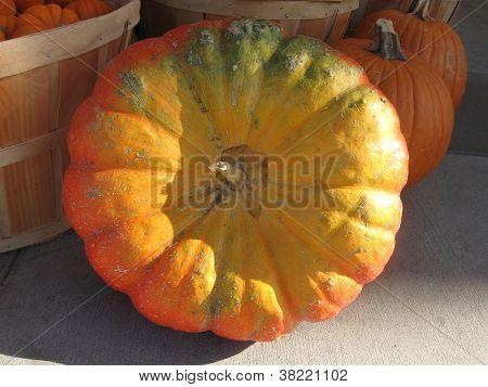 golden yellow pumpkin
