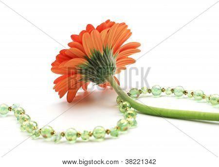 Daisy With Crystal Beaded Jewelry