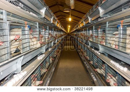 Modern Chicken Coop Farm